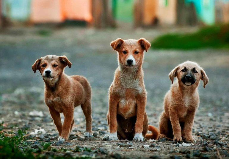 ΑΔΕΣΠΟΤΑ Δήμος Δωρίδος Σκύλοi Κουτάβια Κατοικίδιο Ζώο Γάτα Κατοικίδιο Ζώο